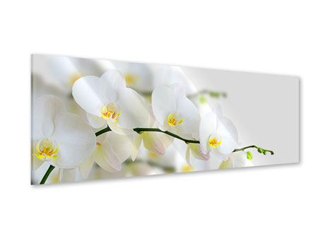 Panoramic Acrylic Print White Orchids