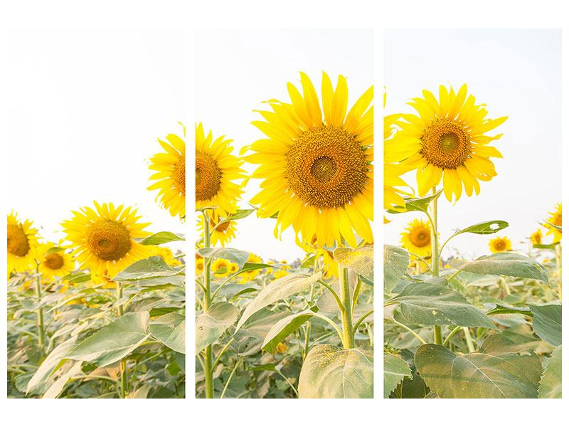 3 Piece Acrylic Print The Sunflower Field