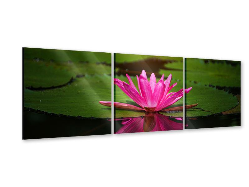 Panoramic 3 Piece Acrylic Print Lily Reflection
