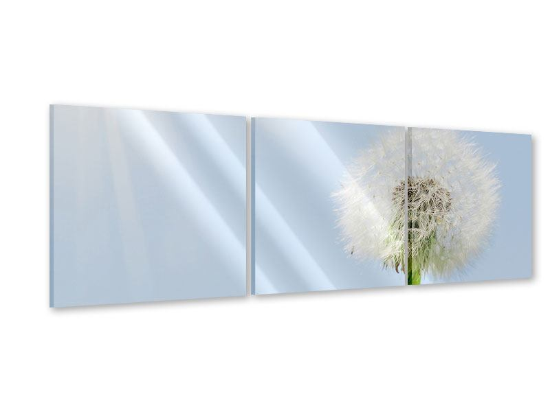 Panoramic 3 Piece Acrylic Print Dandelion In Sunbeam