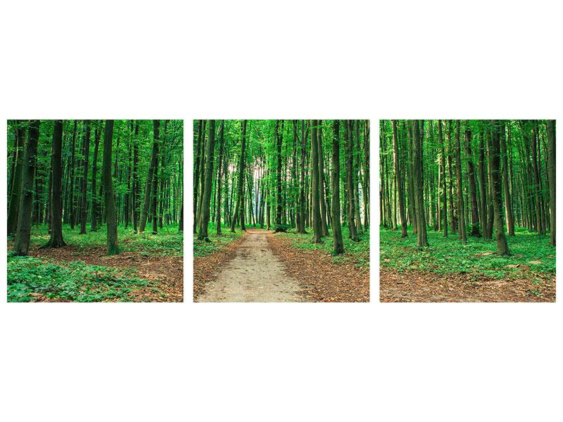 Panoramic 3 Piece Aluminium Print Pine Forests