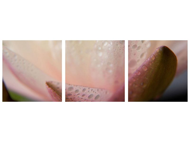 Panoramic 3 Piece Aluminium Print Close Up Lily