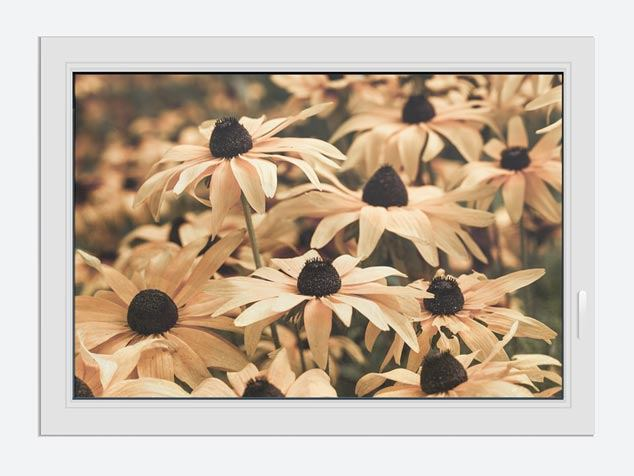 Window Print Daisies In Sepia