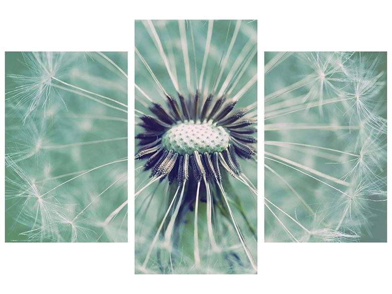 Hartschaumbild 3-teilig modern Close Up Pusteblume