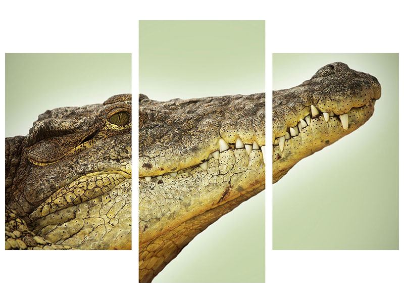 Modern 3 Piece Forex Print Close Up Alligator