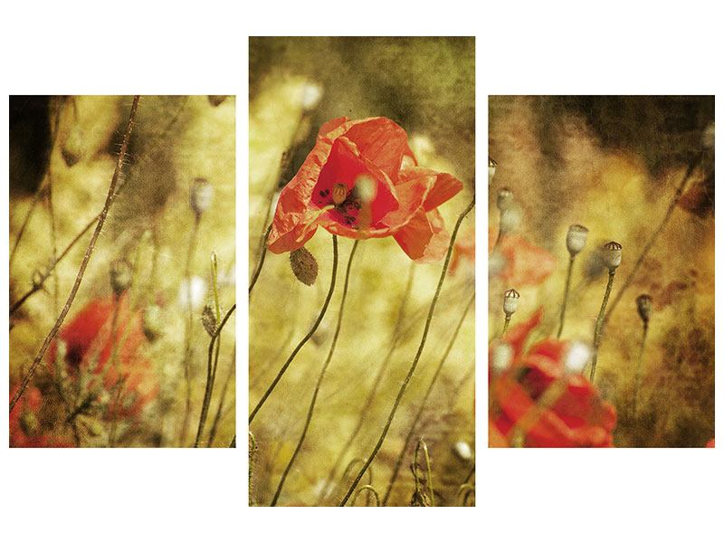 Modern 3 Piece Forex Print The Wild Poppies