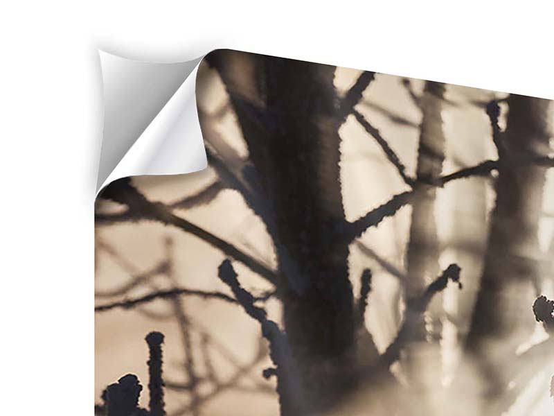 Self-Adhesive Poster Branches In Fog Light