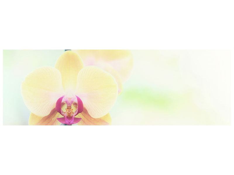 Panoramic Canvas Print Lovely Orchid