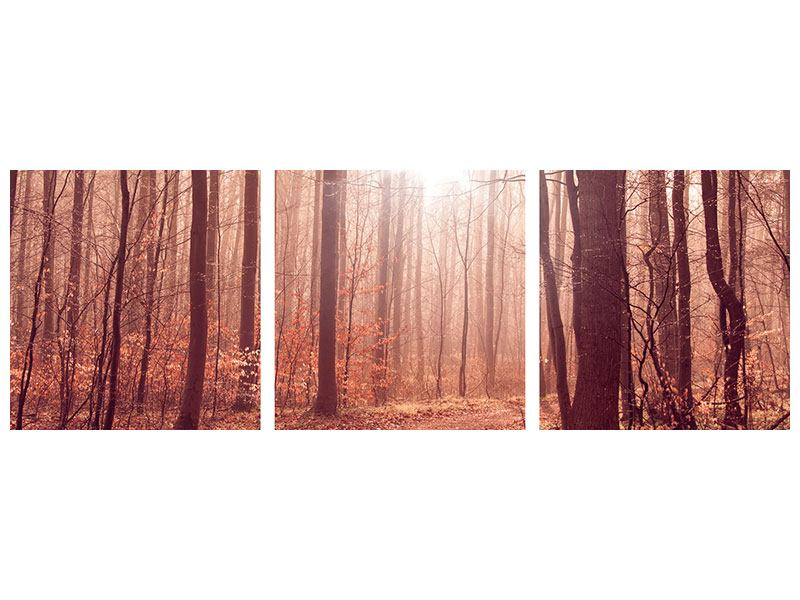 Panoramic 3 Piece Canvas Print Sunset In Autumn Forest