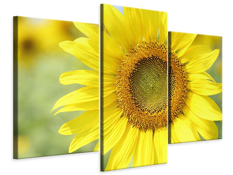 Modern 3 Piece Canvas Print The Flower Of The Sun
