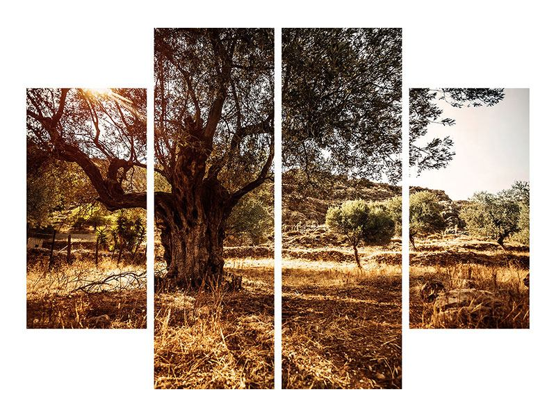 4 Piece Canvas Print Olive Grove