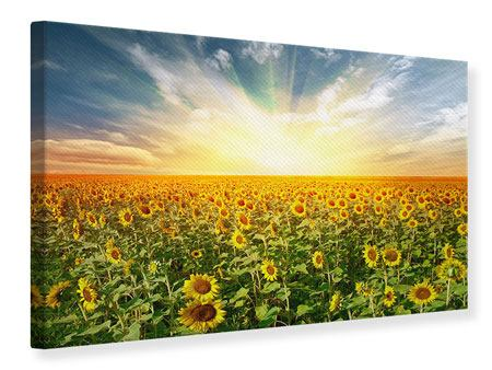 Canvas Print A Field Full Of Sunflowers