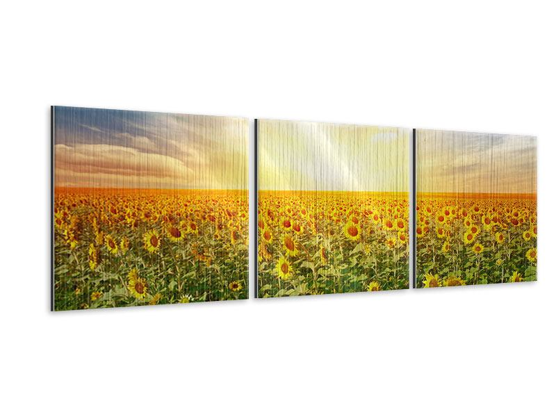 Panoramic 3 Piece Metallic Print A Field Full Of Sunflowers