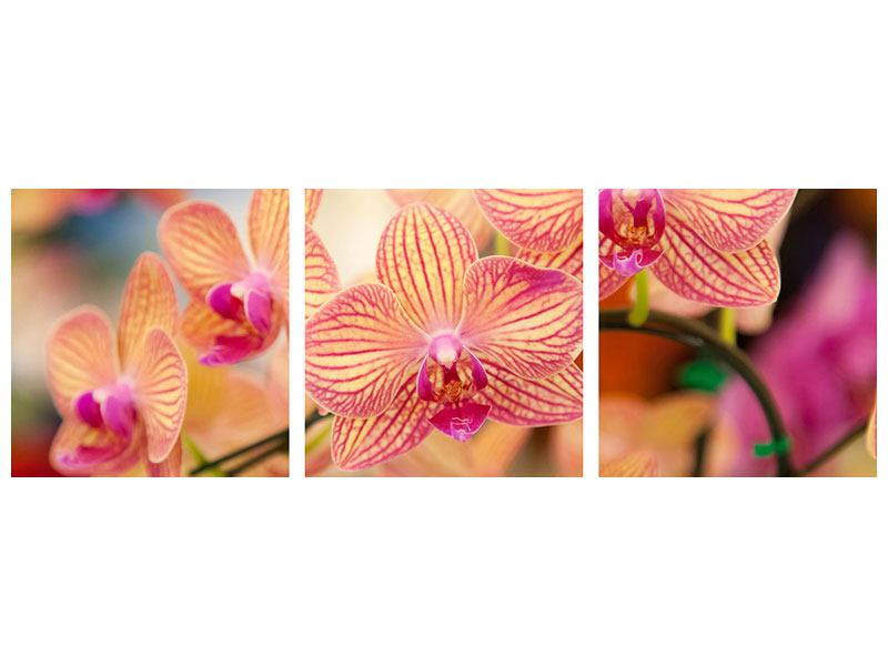Panoramic 3 Piece Poster Exotic Orchids