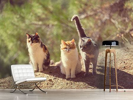 Photo Wallpaper Cats In The Garden